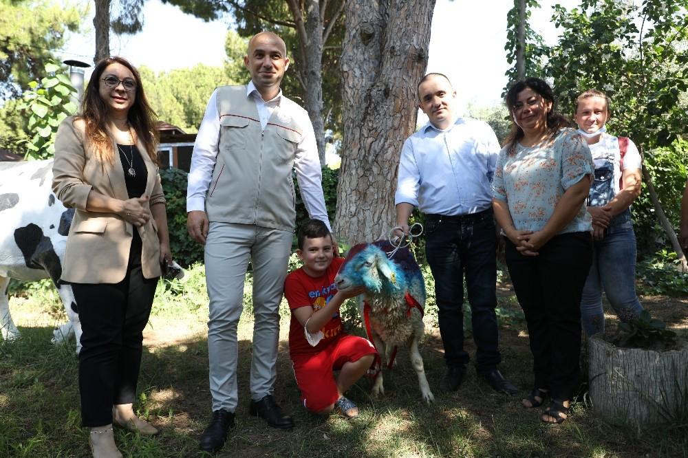 Hiç kurban kesemeyen vatandaş CİMER'den kurbanlık talep etti, Bakan Pakdemirli kurbanlık gönderdi